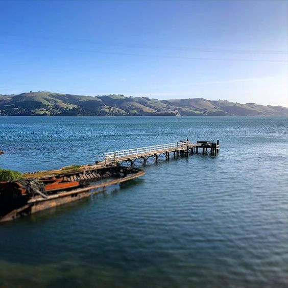 Image of the long jetty at Quarantine Island, Dunedin New Zealand, on a bright and sunny day.