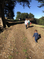 Picture cousins on an adventure, four children walking up farm track under macrocarpa trees.