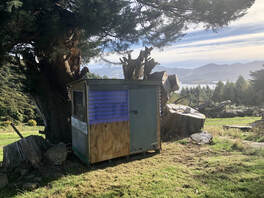 Picture Kids cubby house built during lockdown. Small house under macrocarpa tree with harbour in the background.