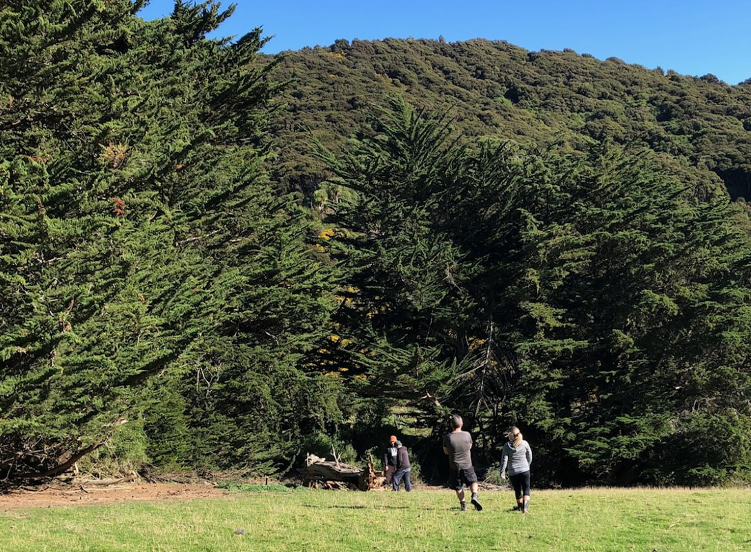 Picture Huge macrocarpa trees and sloping field with three family members going to check out the firewood on offer.